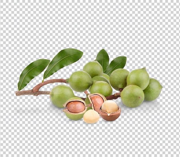 Orzechy makadamia z liśćmi na białym tle