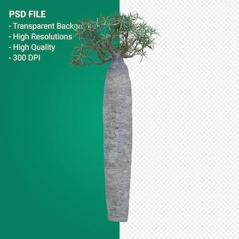Pachypodium geayi renderowania 3d na przezroczystym tle