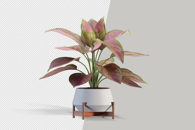 Piękna roślina renderowania 3d na białym tle