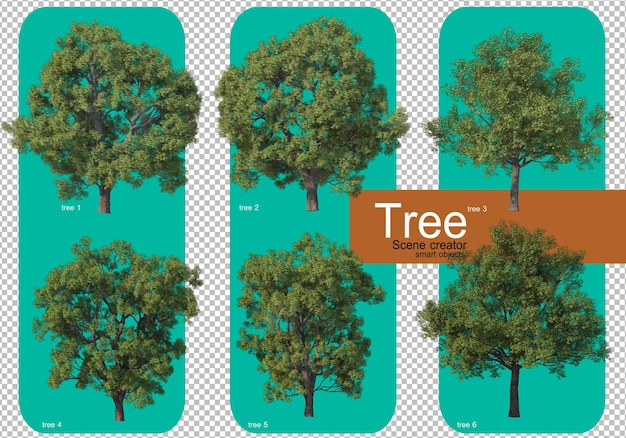 Piękna różnorodność aranżacji dużych drzew