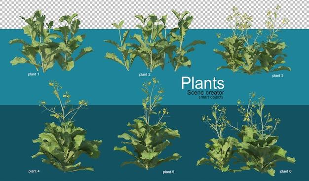 Piękna różnorodność upraw w różnych stylach