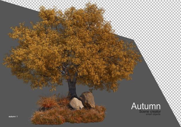 Piękne drzewo ogrodnicze jesienią