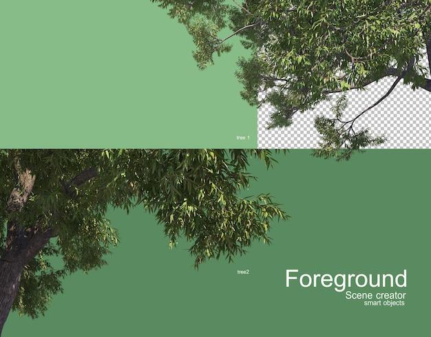Piękne gałęzie drzew renderowania pierwszego planu