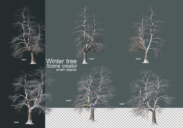 Piękne różne drzewa zimowe na białym tle