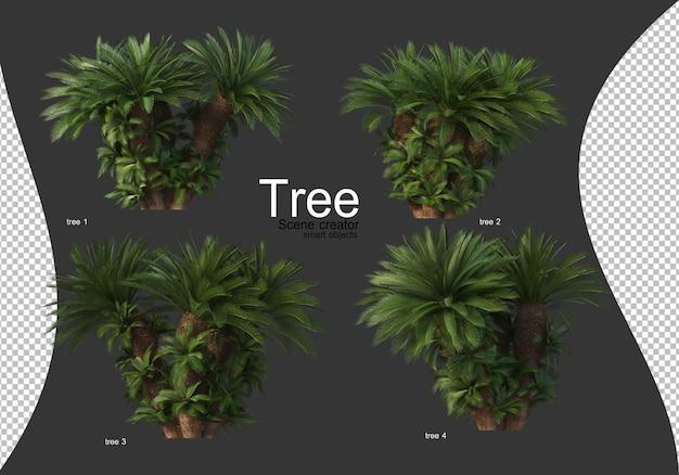 Piękne różne rodzaje drzew na białym tle