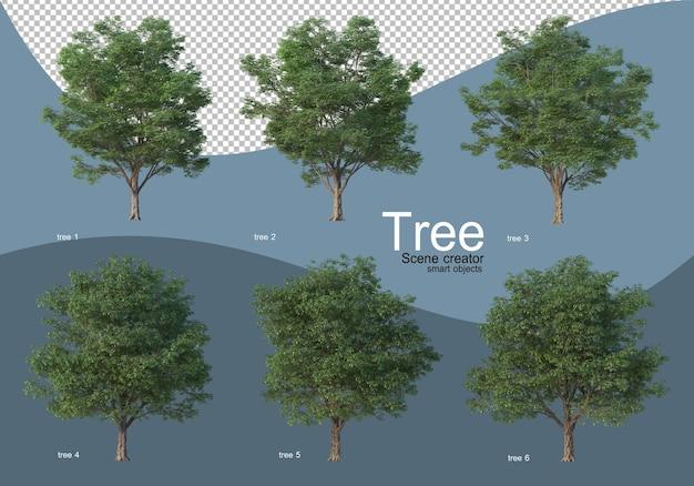 Piękne różne rodzaje drzew