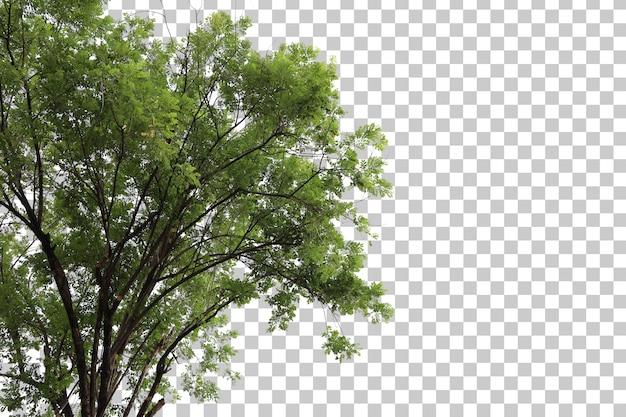Pierwszy plan drzewa
