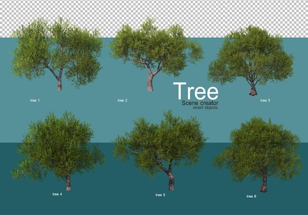 Pokaż wyniki różnych aranżacji drzew