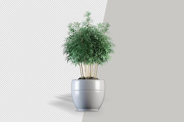 Realistyczna roślina w doniczce na białym tle renderowania 3d