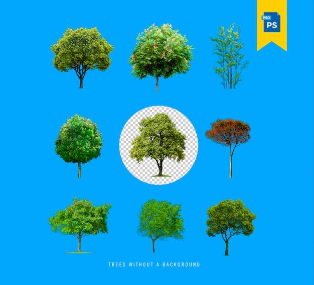 Realistyczne drzewa zestaw kolekcja na białym tle