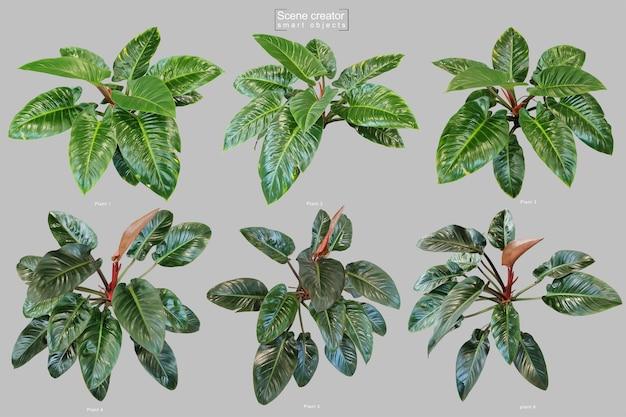 Realistyczne drzewo filodendron czerwony szmaragdowy