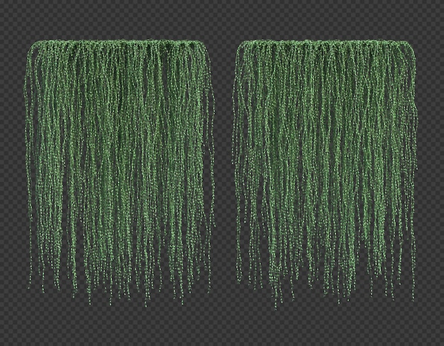Renderingu 3d dischidia wiszące rośliny