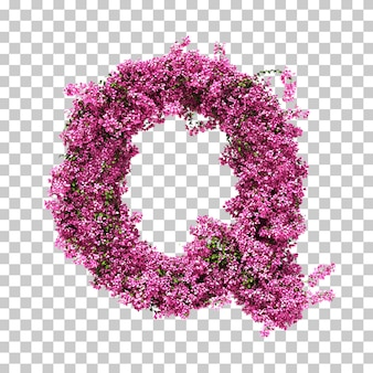 Renderowania 3d litery bougainvillea q