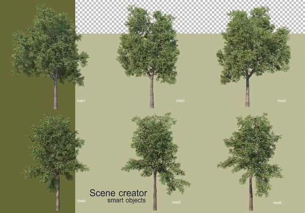 Renderowania 3d różnych drzew izolowanych