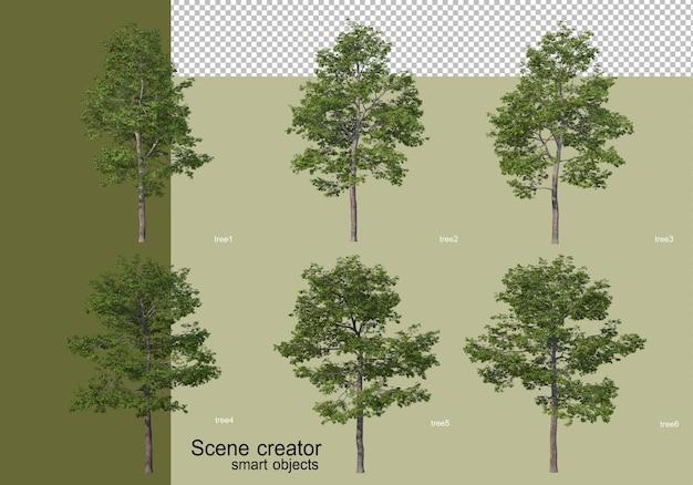 Renderowania 3d różnych konstrukcji drzewa na białym tle