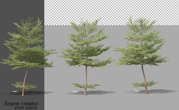 Renderowania 3d różnych typów drzew na białym tle