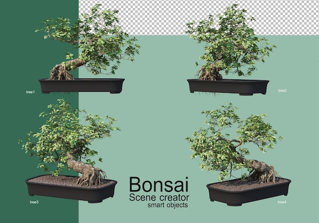 Renderowanie 3d rozmieszczenia drzewek bonsai