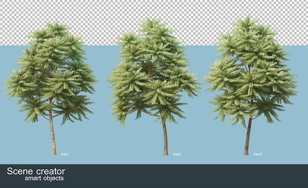 Renderowanie 3d różnych gatunków drzew