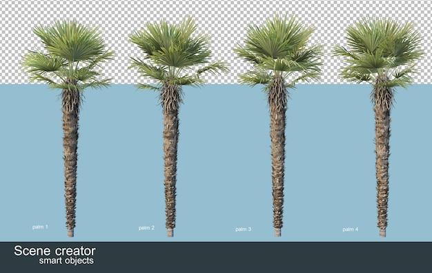 Renderowanie 3d różnych rodzajów drzew palmowych