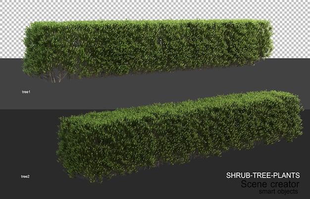 Renderowanie 3d różnych typów układów krzewów
