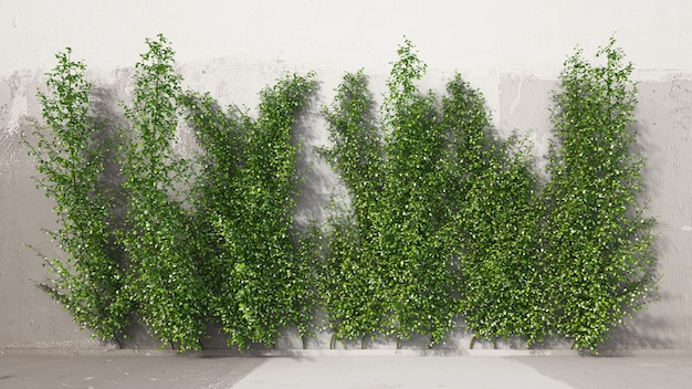 Renderowanie 3d wspinacza jaśminu gwiazdowego na ścianie obejmuje warstwę drzewa i warstwę cienia