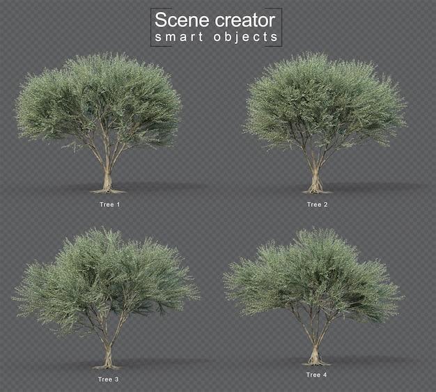 Renderowanie 3d zestawu bezowocnego drzewa oliwnego