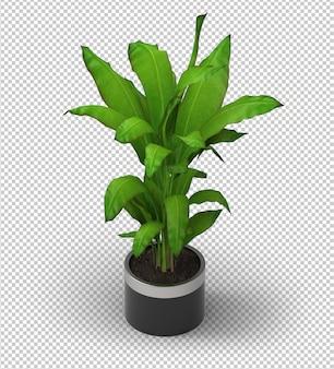 Roślina 3d. widok izometryczny.