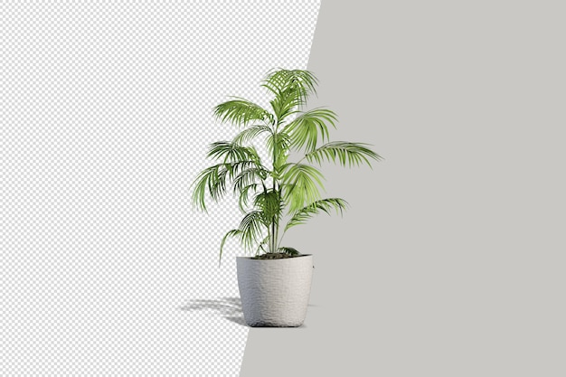 Rośliny doniczkowe kwiaty w renderowaniu 3d na białym tle
