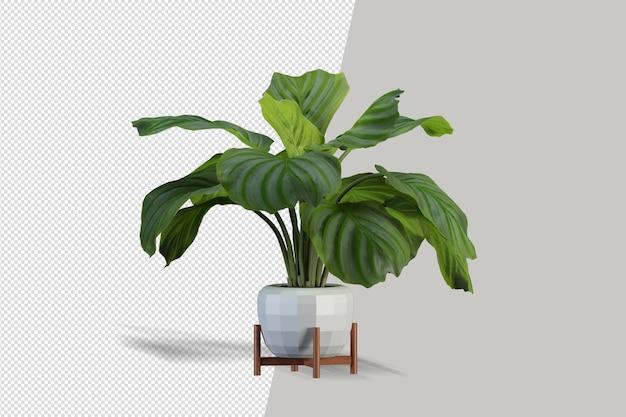 Rośliny doniczkowe w renderowaniu 3d na białym tle