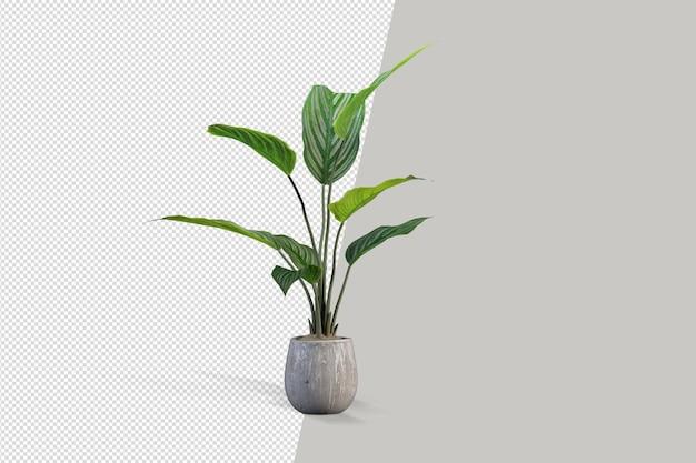 Rośliny Doniczkowe W Renderowaniu 3d Na Białym Tle Premium Psd