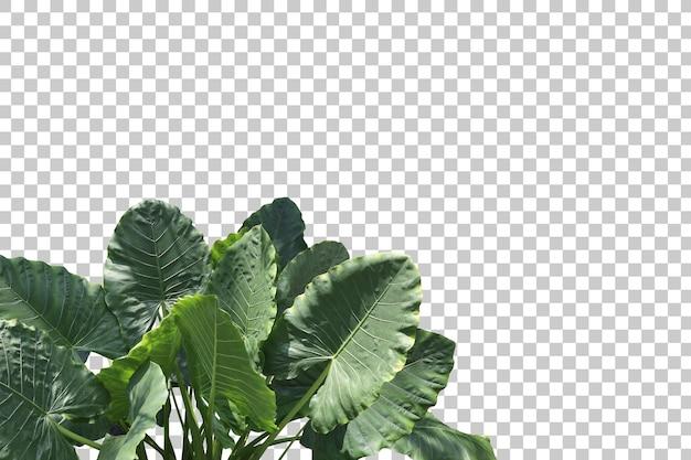 Rośliny tropikalne drzewa na białym tle