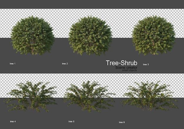 Różne drzewa i krzewy