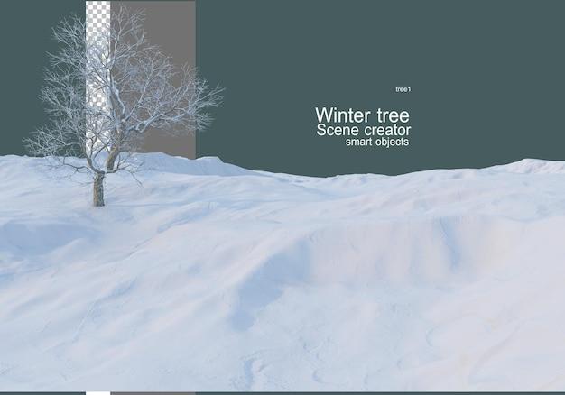 Różne drzewa i rośliny zimą
