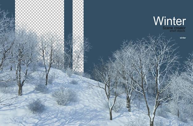 Różne drzewa zimą