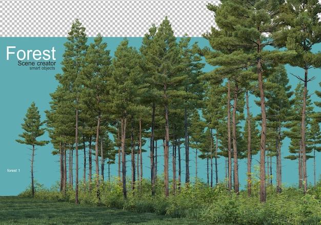 Różne formy lasu