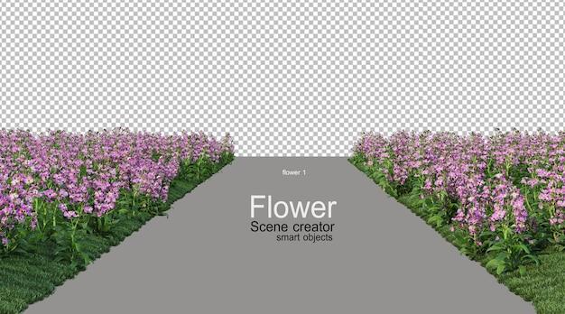 Różne Kolory Kwiatów Premium Psd