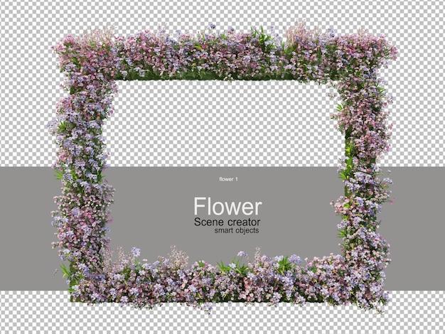 Różne kolory kwiatów