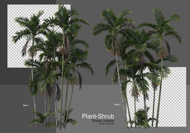 Różne palmy i krzewy