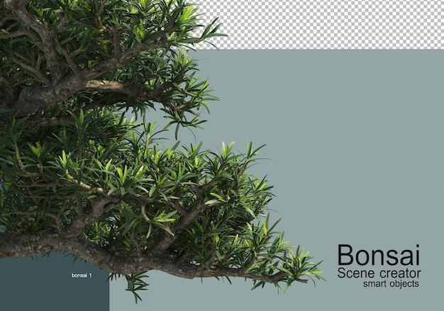 Różne rodzaje bonsai