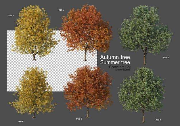 Różne rodzaje drzew jesiennych i letnich