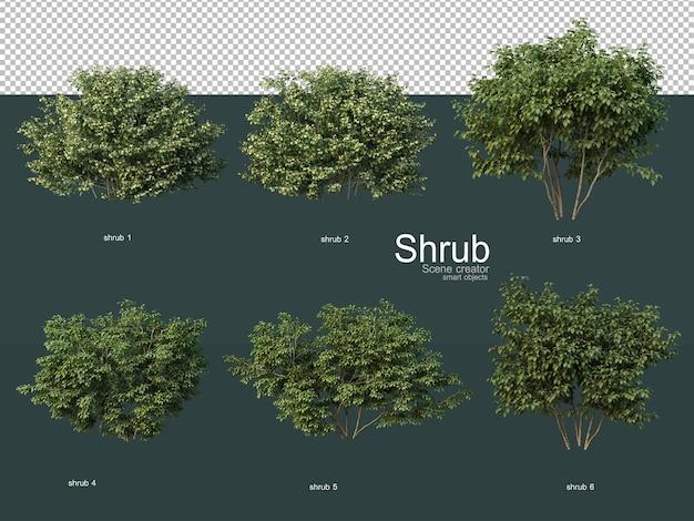 Różne rodzaje krzewów