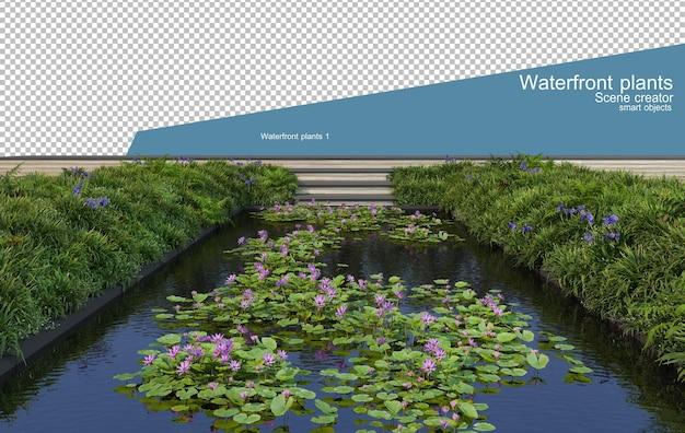 Różne rodzaje lotosu w stawie