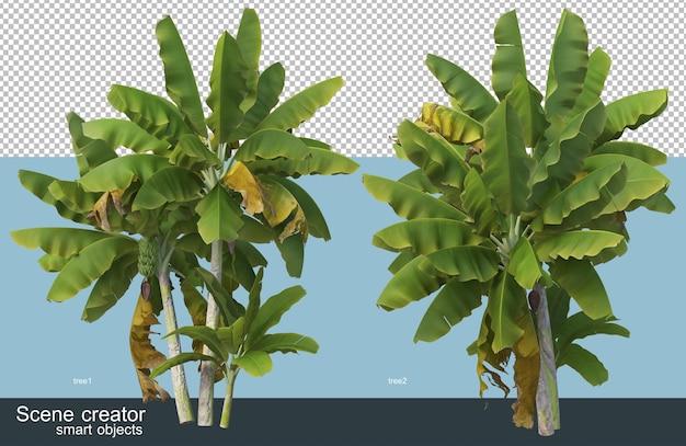 Różne rodzaje renderowania 3d bananowca