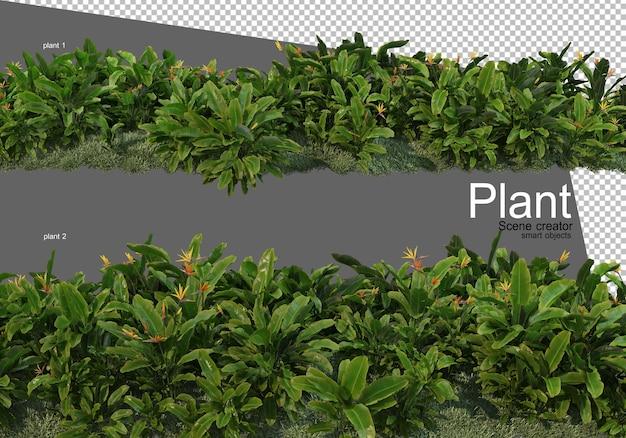 Różne rodzaje renderowania krzewów izolowane
