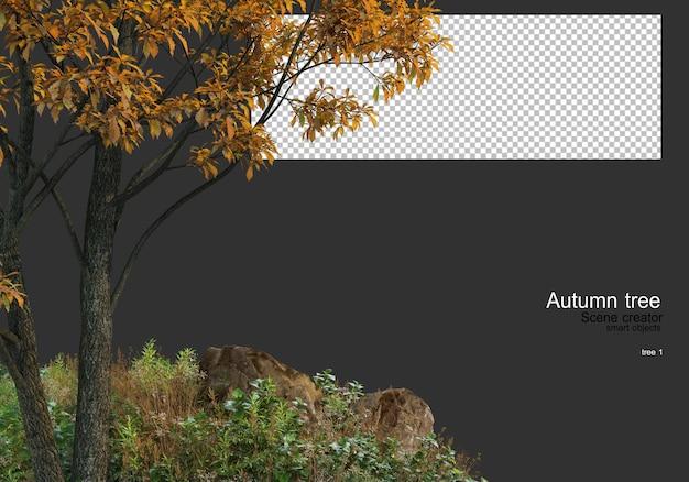 Różnorodne drzewa i trawy jesienią