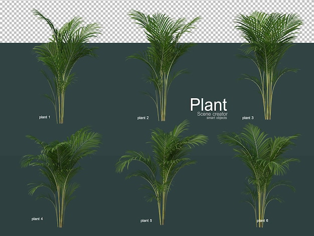 Różnorodne drzewa ozdobne