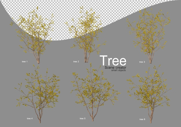Różnorodne drzewa w pełnym rozkwicie z pięknymi kwiatami