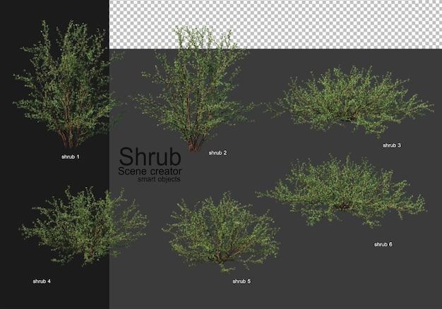 Różnorodne krzewy