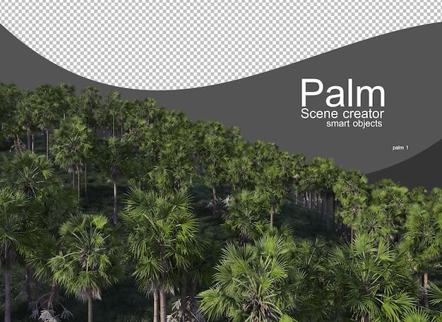 Różnorodne palmy