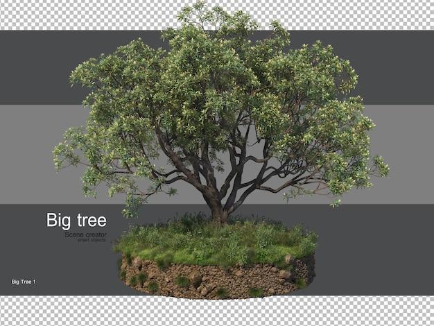 Różnorodność drzew i traw